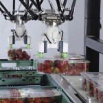 Brillopak outlines opportunities with robotics
