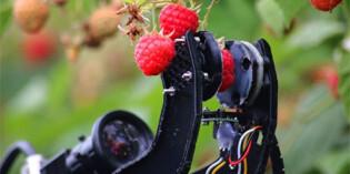 Fieldwork Robotics and Bosch developing robot raspberry picker